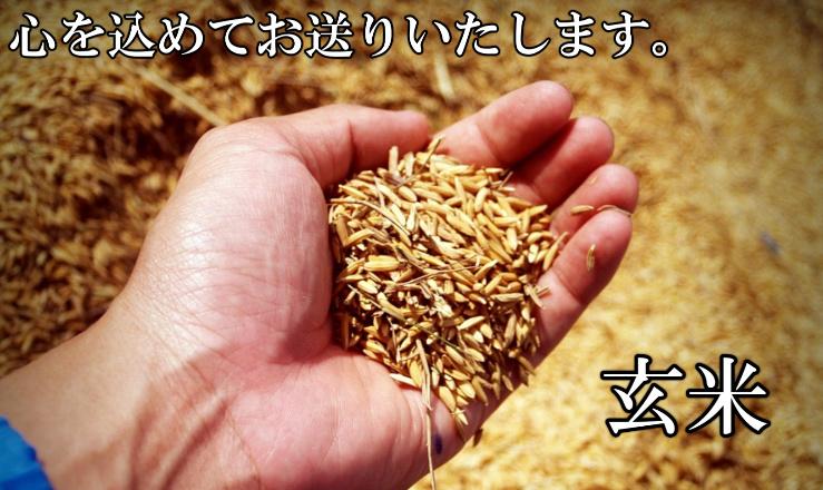 徳島県で育てたオーガニックの玄米の写真