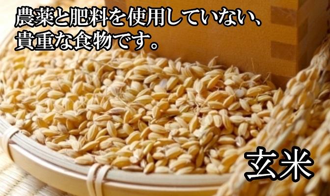 オーガニックの貴重な米