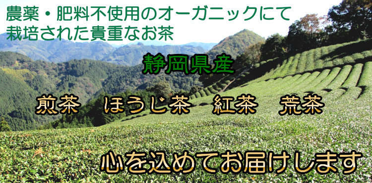 農薬と肥料不使用のオーガニックにて栽培された貴重なお茶